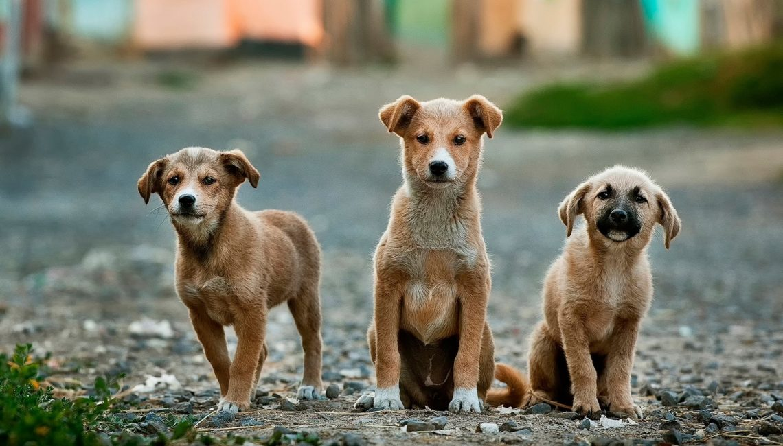 Pet Insurance: Protecting Your Client's Entire Family